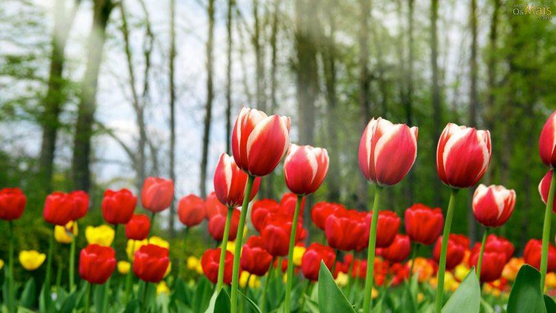 Significado das Flores de Casamento