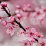 5 Dicas de Flores para o Casamento no Inverno